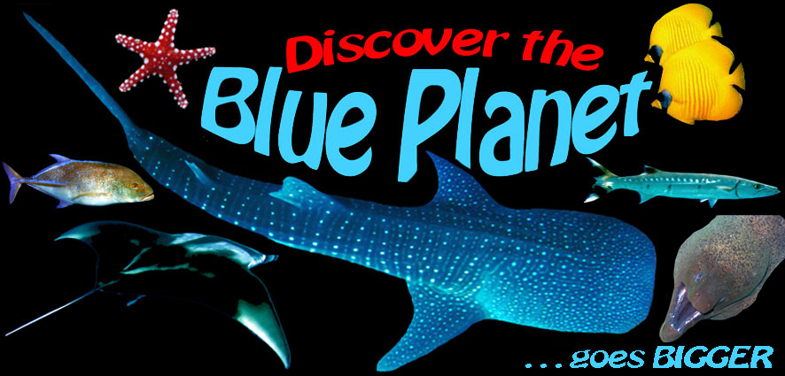 Discover the blue Planet - your source for snorkeling adventure...