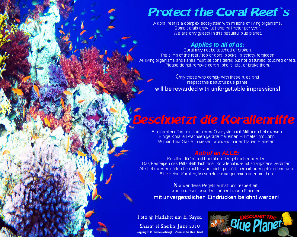 Please protect the coral reef`s on our planet!!!